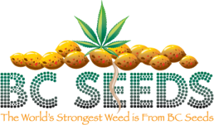 bc seeds review top