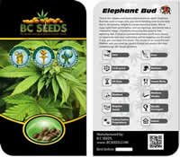 BC Seeds Reviews
