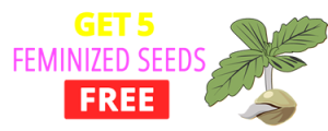 Top Seed Banks Free Seeds